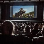 Zdjęcie sali kinowej w Elektroniku. Trwa seans, na sali ciemno. Na ekranie film Król Lew. Na widowni zarysy głów widzów, oświetlone blaskiem ekranu.