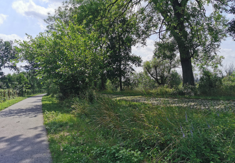 Droga prowadząca do mostu pieszo-rowerowego w Siekierkach.