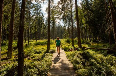 Kobieta idąca kładką na jednym z górskich szlaków